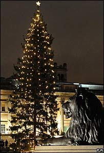 England Christmas Tree.English At Sandvika Christmas Tree From Norway To England
