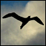 Albatross (BBC)