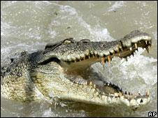 Samersen писал(а). вот крокодил и пасть. babochka. не, там полно...