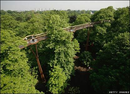 Kew's treetop walkway los arboles desde el punto de vista de los pajaros
