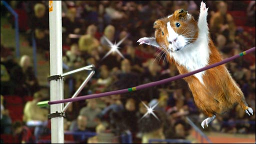 Bbc Sport Olympics My Games Guinea Pig Olympics
