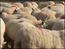 UK Farmers Aim for Halal Meat Market