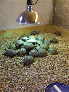 Bbc News Uk Wales Cruel Tortoise Trader Is Banned