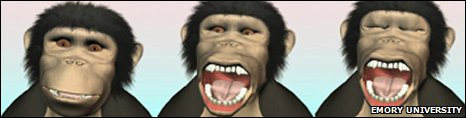 Yawning chimp animation (Emory University)