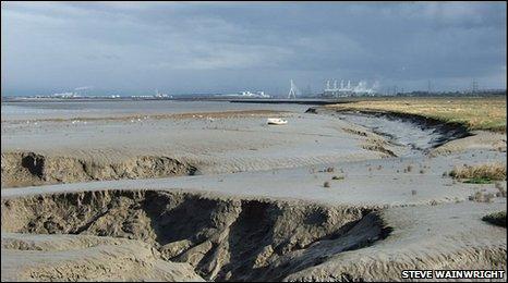 Bbc Where To Spot Wildlife On The Dee Estuary