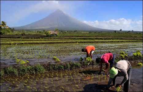 fertile soil volcano - photo #4