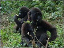 Gorillas 'ape humans' over games