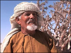 BBC News - Frankincense: Could it be a cure for cancer?