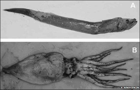 Deep sea fish 'mystery migration' across Pacific Ocean