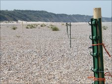 Bbc Electric Fences Protect Little Tern Eggs At Kessingland
